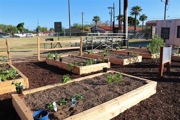 HonorHealth and Sprouts Create Outdoor Learning Lab at Desert View